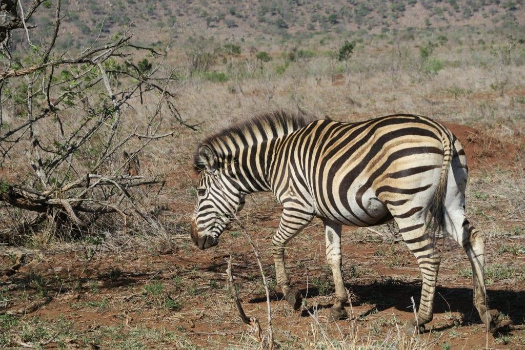 Self Driven Safari
